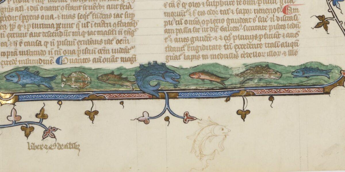 Albertus Magnus, De animalibus, BnF Latin 16169, début du livre XXIV-poissons_det-marge-inf. Ichtya - Craham