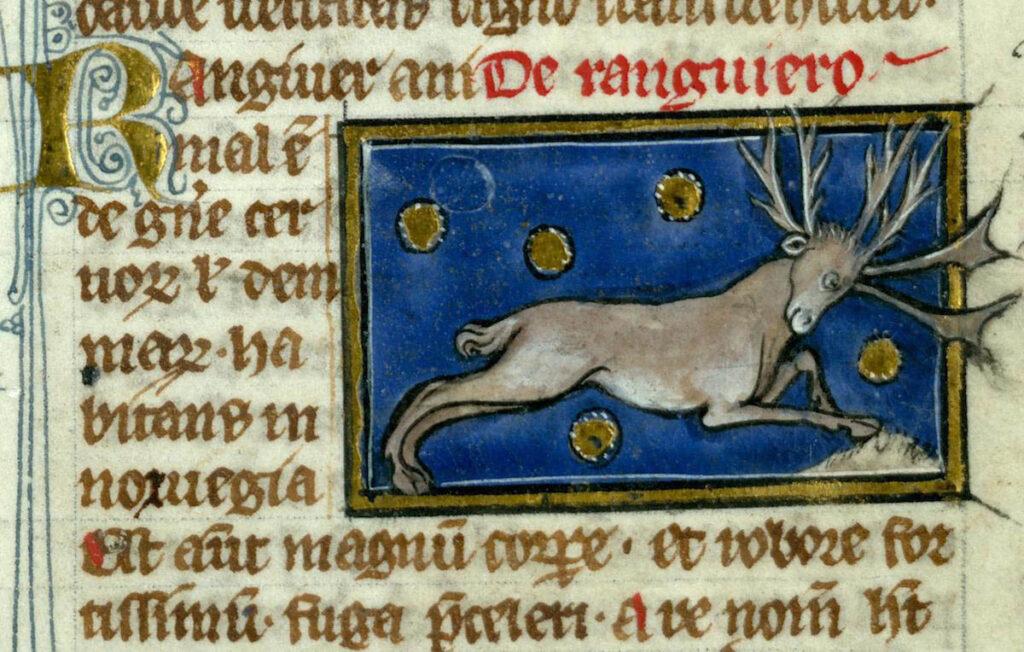 Le renne. Thomas de Cantimpré, Liber de natura rerum, Valenciennes, BM ms 320, f. 77